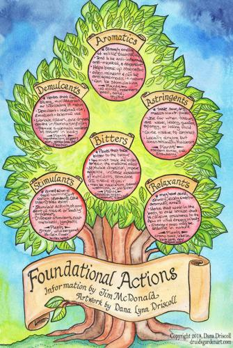 foundational actions SM
